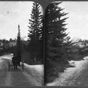 Cover image of [Buggie(?) on Tunnel Mountain Road near Banff]