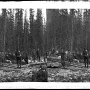 Cover image of Men stacking logs from skid