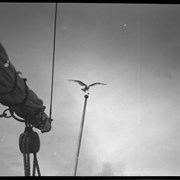 Cover image of Seagull on mast