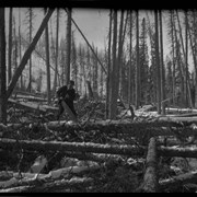 Cover image of Elliott Barnes clearing timber on his Jumping Pound homestead