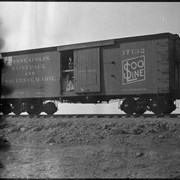 Cover image of Soo Line boxcar with man and colt in door