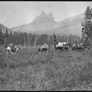 Cover image of Barnes family with pack train on trip to Kootenay Plains, Molar Mountain in background