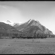 Cover image of Horses on Kootenay Plains, Indian and Barnes herding, Elliott Peak in background