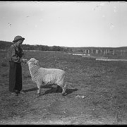 Cover image of Findlay Barnes with sheep at Jumping Pound