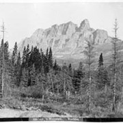 Cover image of 599. Castle Mountain, Rockies