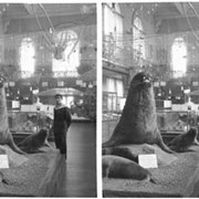 Cover image of Monaco trip, interior of museum (France?), stereo
