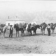 Cover image of 29. Pack horses at Lytton