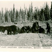 "Cover image of ""Just Another Convention, Banff, Canada"