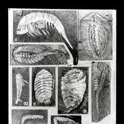 Cover image of  [Several images of fossils][Burgess Shale?]