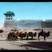 Cover image of [C]amel train at City, Wall, Peking