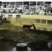Cover image of [Bull fight]