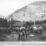 Cover image of Pack train arrives at White Man's Pass camp / 27116