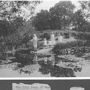 Cover image of The Lily Pond of the House / 27838