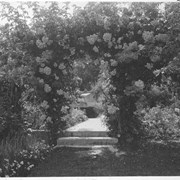 Cover image of Arbor of roses / 27923