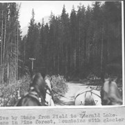 Cover image of Drive by stage from Field to Emerald Lake. Scene in pine forest, mountains with glacier ahead / 27617