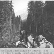 Cover image of Drive by stage from Field to Emerald Lake. Scene in pine forest, mountains with glacier ahead / 27620