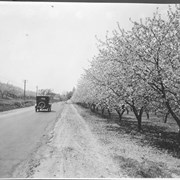 Cover image of Canada. A Niagara fruit orchard in blossom time / CN51