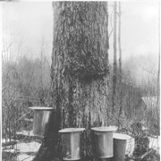Cover image of Canada. Gathering maple sap / CN225