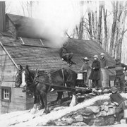 Cover image of Canada. Province of Quebec. Bringing the maple sap to the sugar house for boiling / 50909