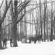 Cover image of Canada. Province of Quebec. Gathering sap for the making of maple sugar / 50914