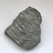 Cover image of Metamorphic Rock