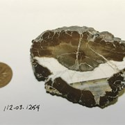 Cover image of Chalcedony Mineral