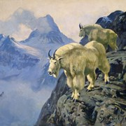 Cover image of Mountain Goats and Mount Assiniboine