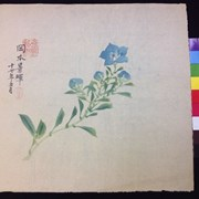 Cover image of Untitled [Gentian Flower]