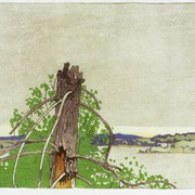 Cover image of The Stump, Lake of the Woods