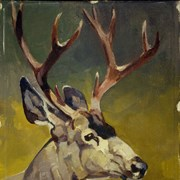 Cover image of Deer Head