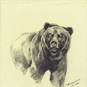 Cover image of Bear sketch