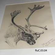 Cover image of Caribou head