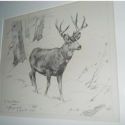 Cover image of Deer in snow