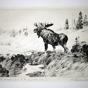 Cover image of Bull Moose