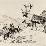 Cover image of Mountain Caribou